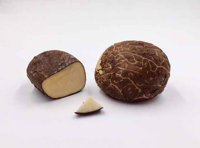 Corozo nuts (also known as tagua nuts) can be an alternative to ivory and typically range from 4 to 8 cm (1 ½ to 3 in.) tall.