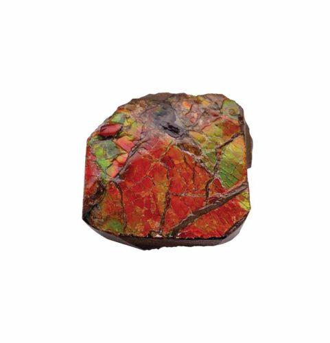 Ammolite specimen from Calgary.