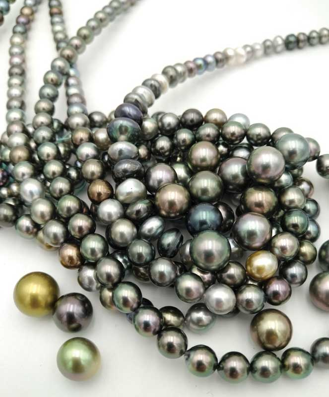Round and half-round cultured Tahitian pearls.