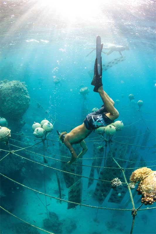 Kamoka Pearls farms Tahitian pearls using practices that actually benefit aquatic life. Photo by Josh Humbert